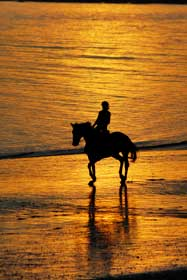 rider silhouette on beach at sunset